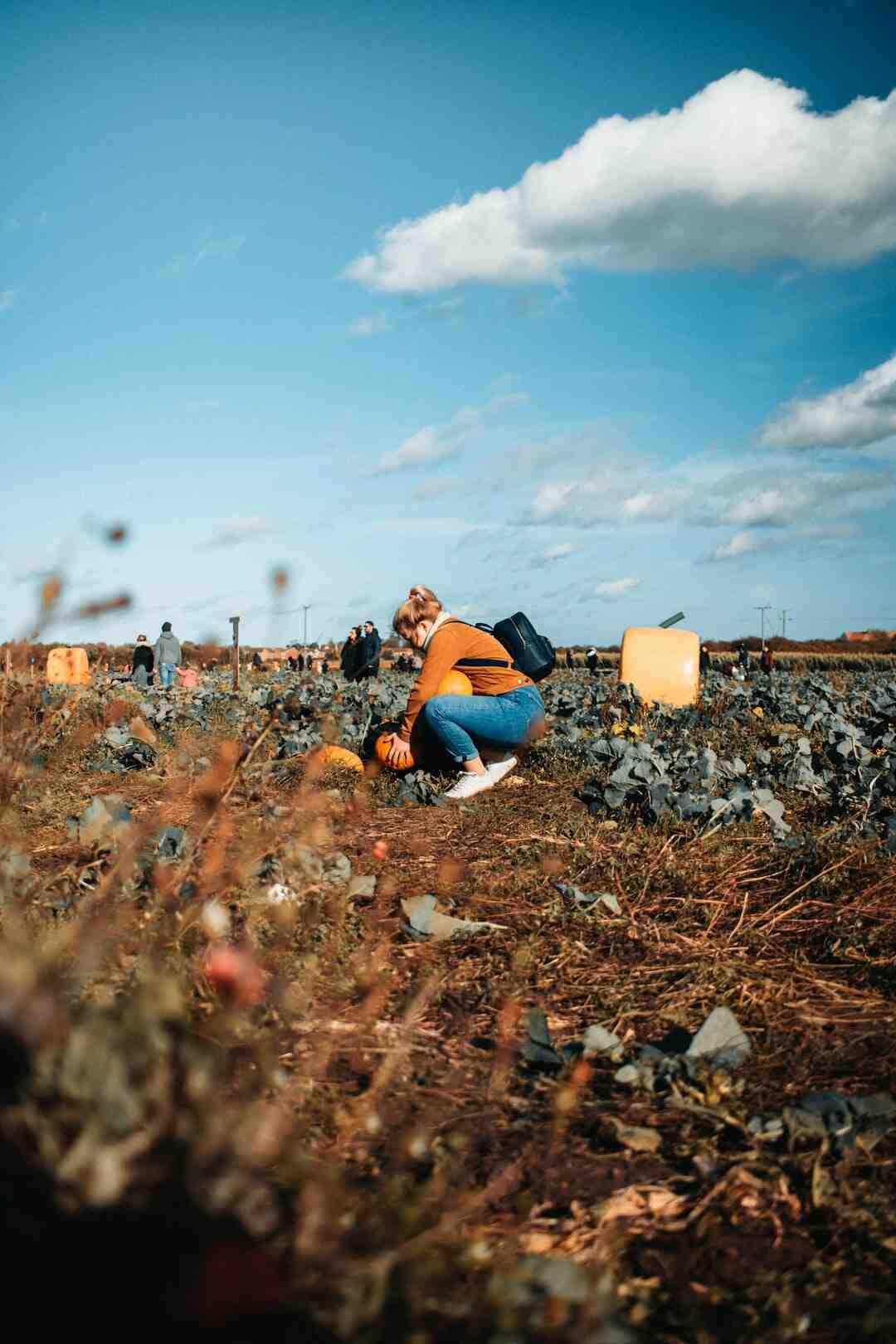 Comment Est-ce que les hydrocarbures polluent le sol ?