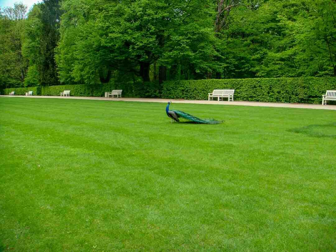 Comment avoir une belle pelouse sans mauvaises herbes ?