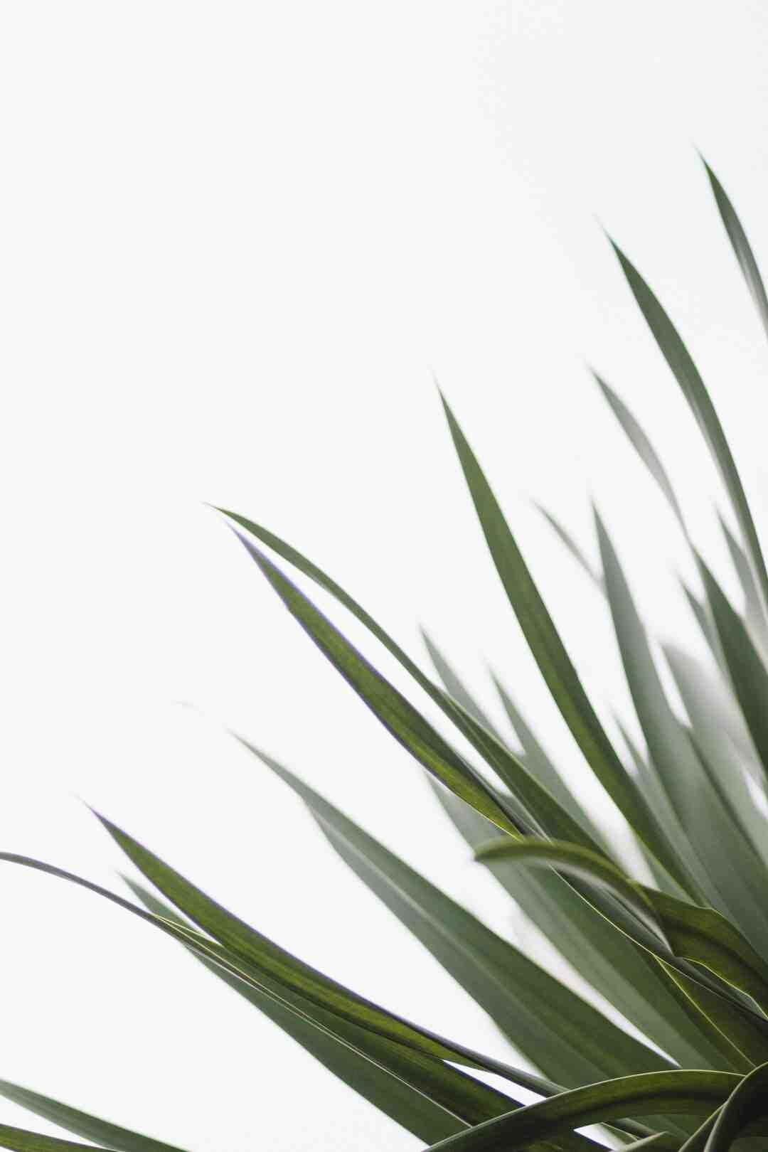 Comment bien rempoter une plante d'intérieur ?