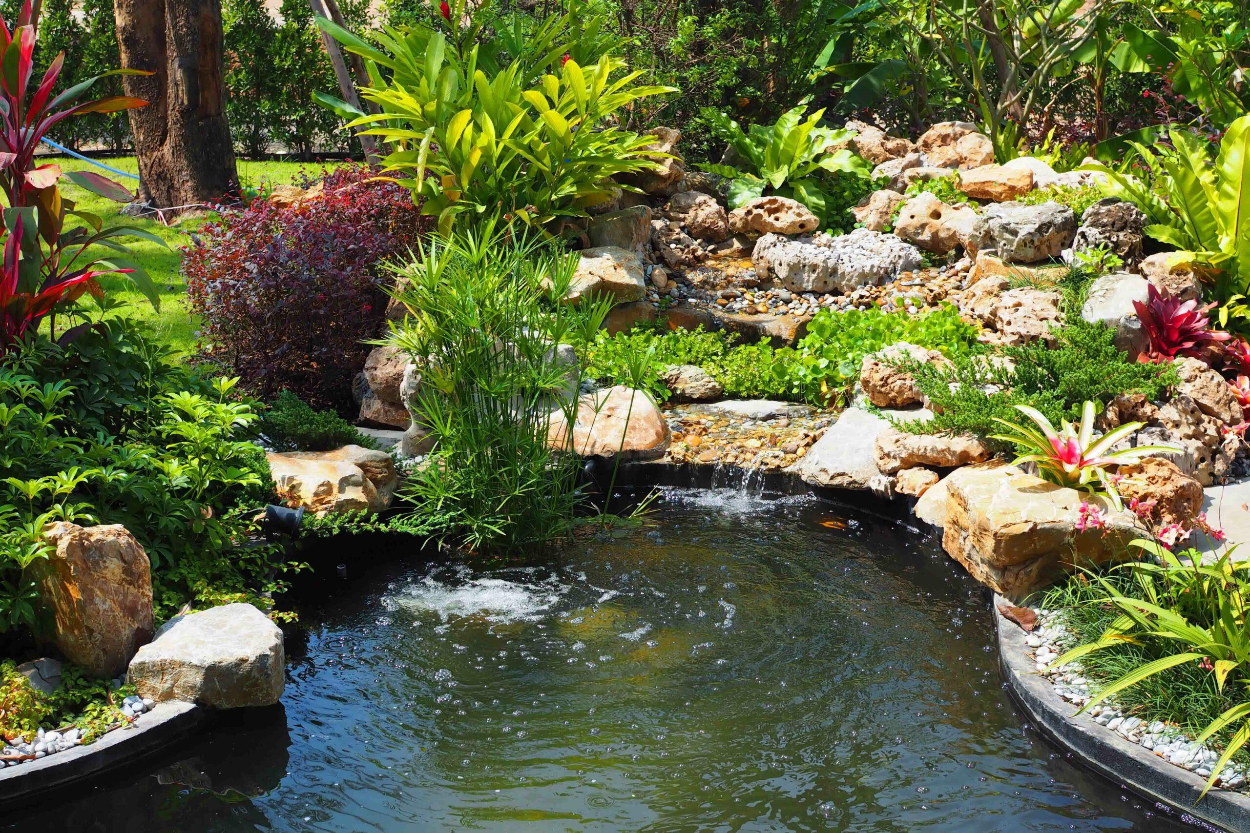 Comment curer un étang ?