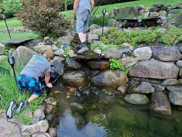 Comment éclaircir l'eau d'un étang ?