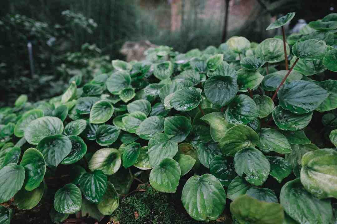 Comment fortifier les plantes ?