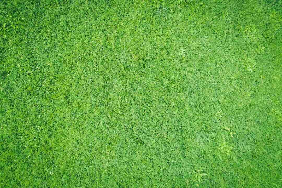 Comment garder une pelouse verte en hiver ?