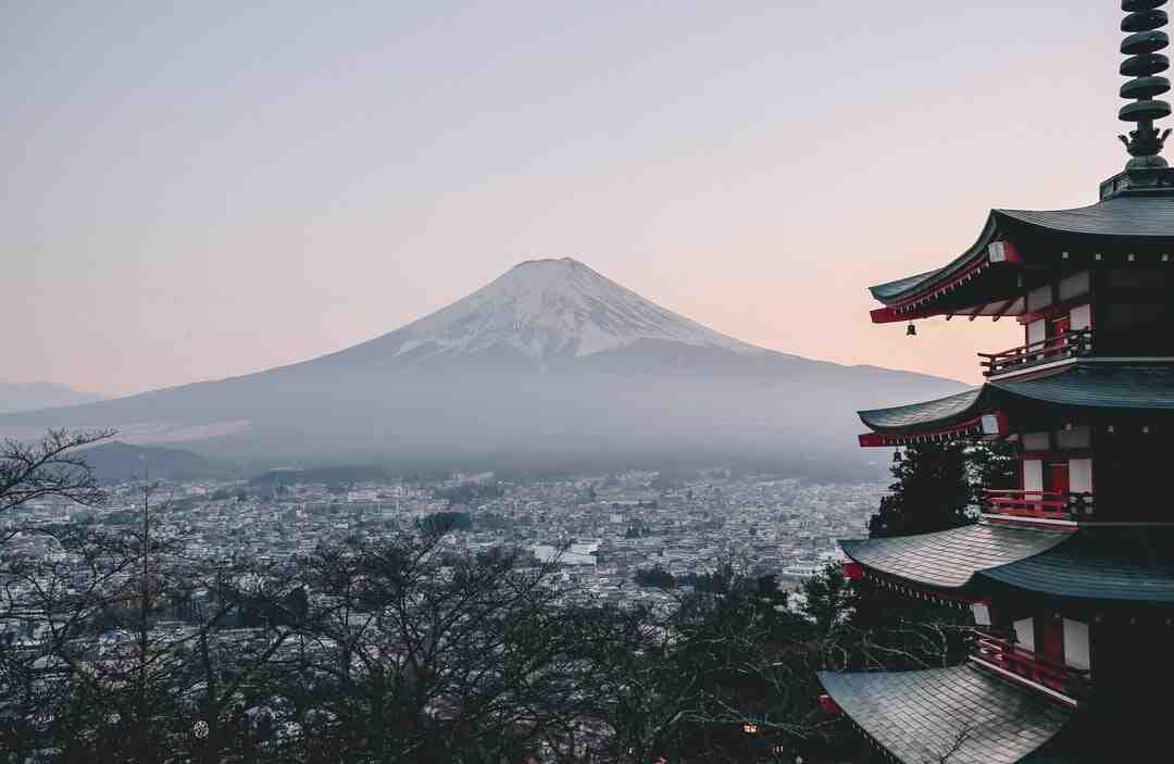 Pourquoi la renouée du Japon est invasive ?