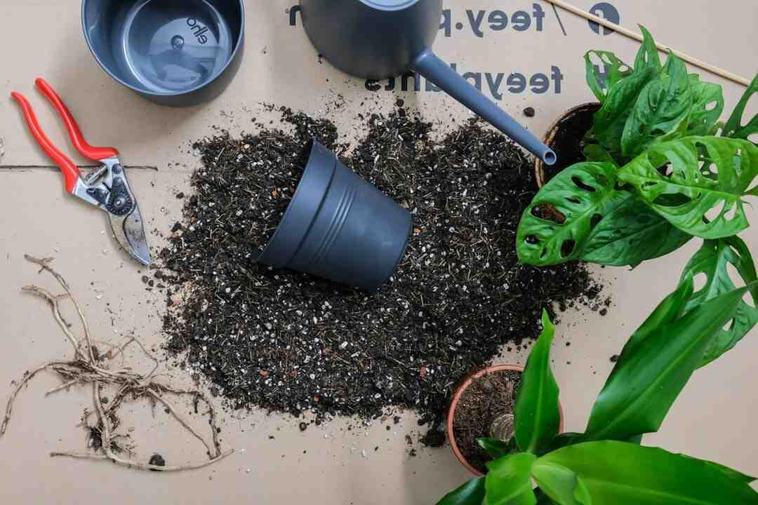 Quand rempoter les plantes vertes d'intérieur ?