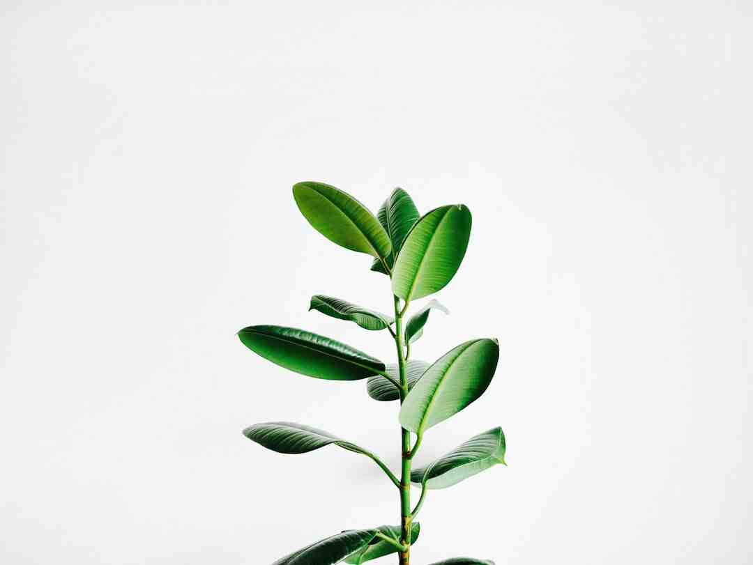 Quand rempoter une plante ?