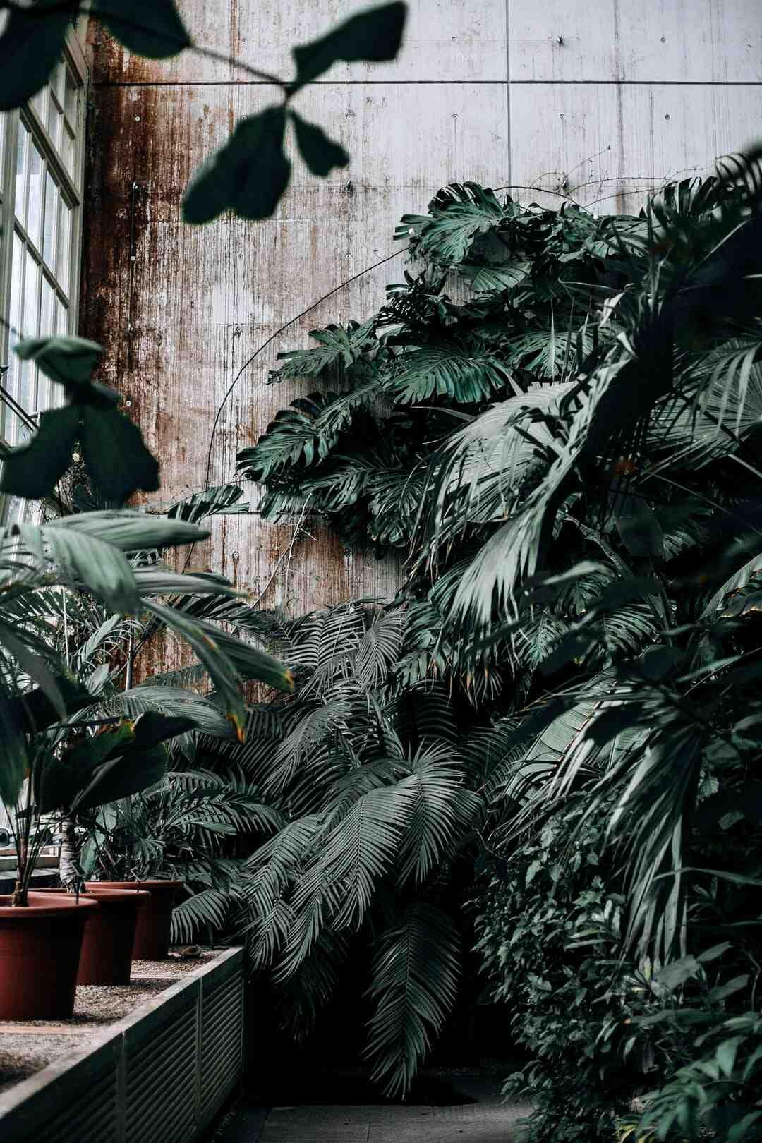 Quels nutriments pour les plantes ?