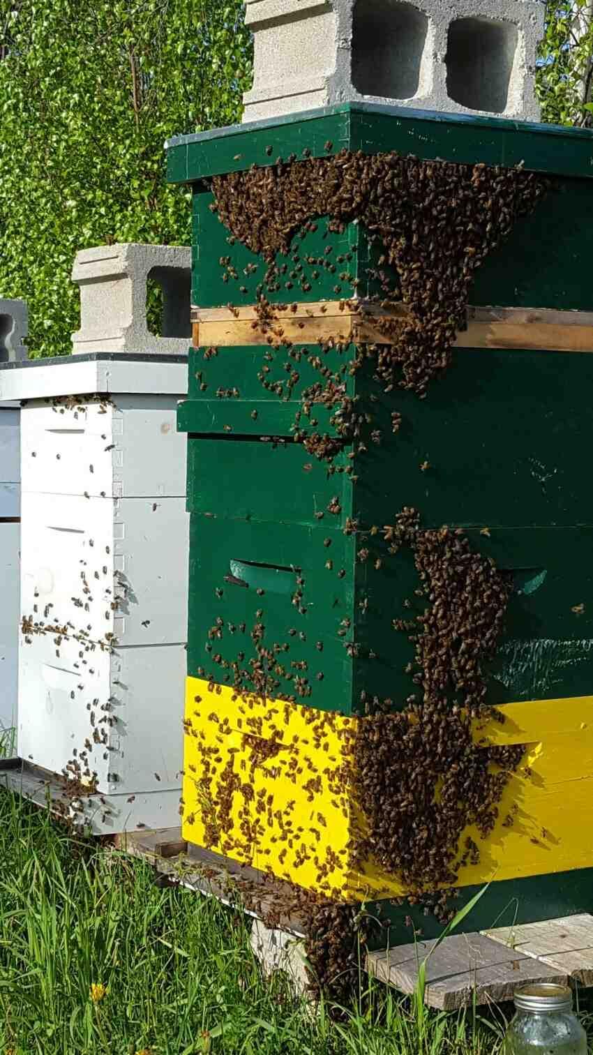 Comment Desorienter les abeilles ?