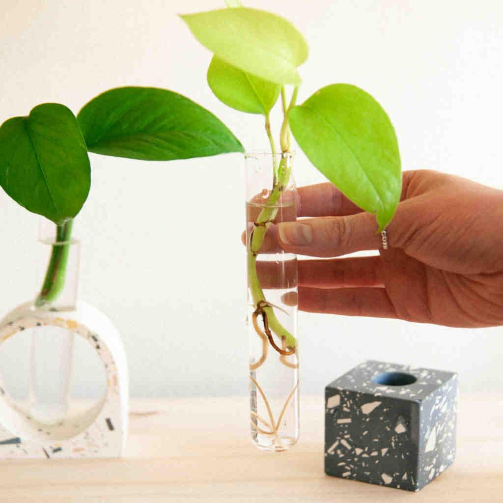 Comment faire des boutures de plantes d'intérieur ?