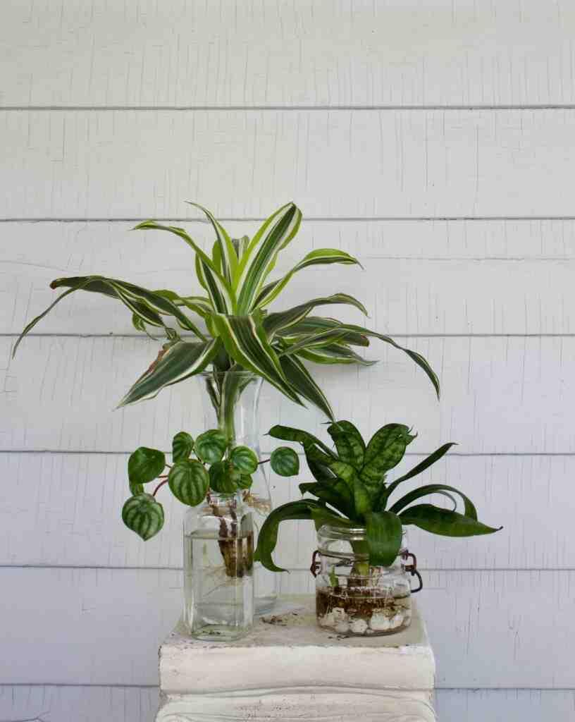 Comment propager une plante ?
