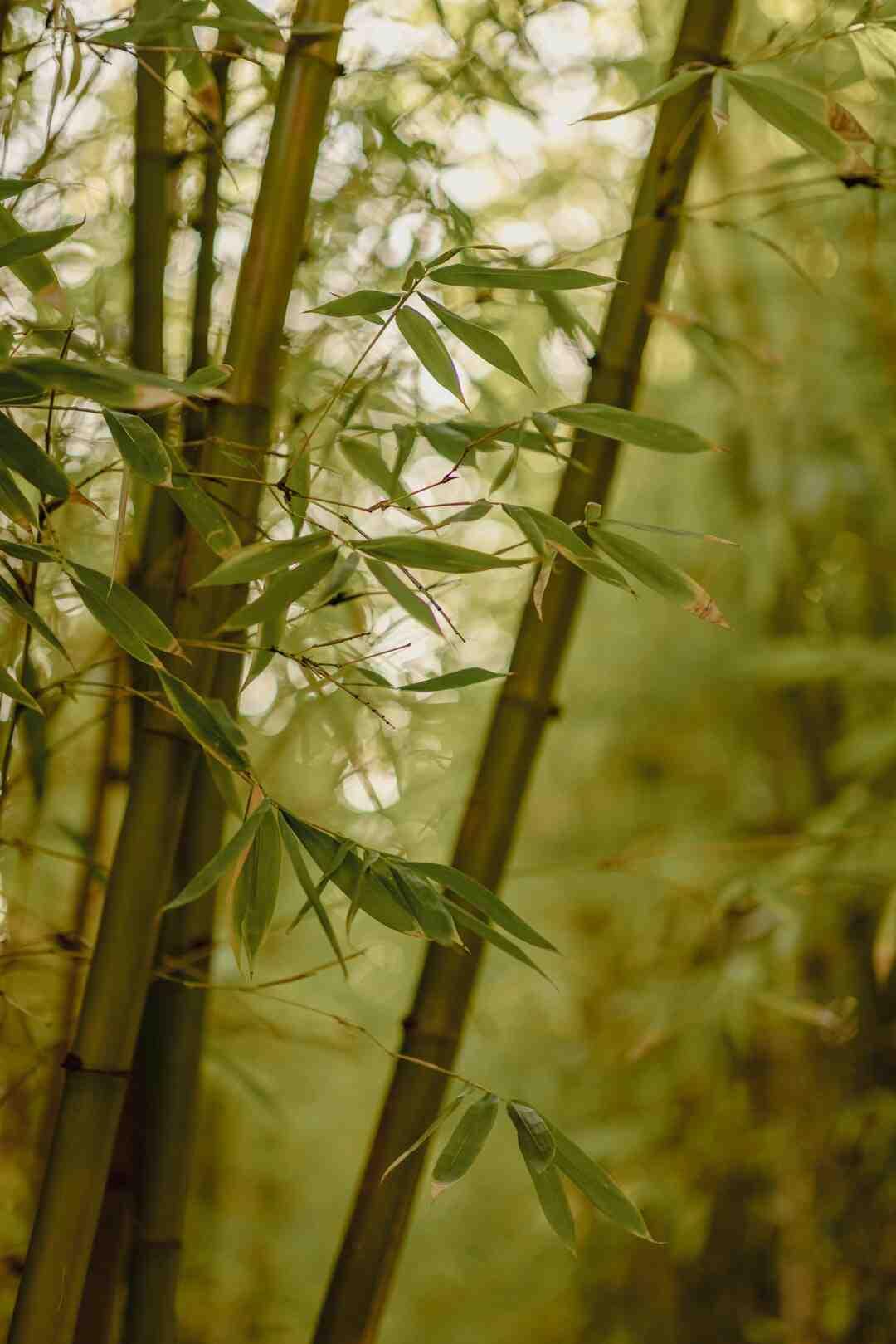 Comment se débarrasser des plants de houblon ?