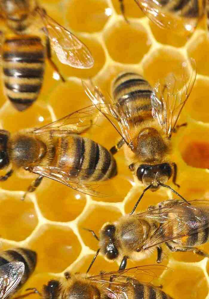Où dorment les abeilles solitaires ?