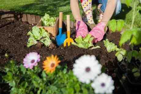Quel est le meilleur insecticide naturel ?