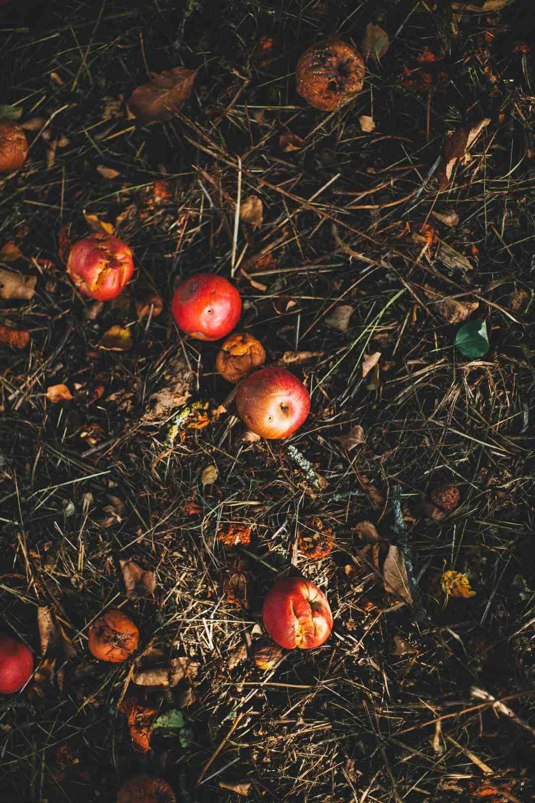 Quelles feuilles ne pas mettre au compost ?