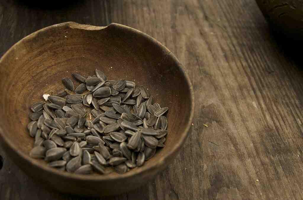 Quelles sont les graines qui poussent le plus vite ?