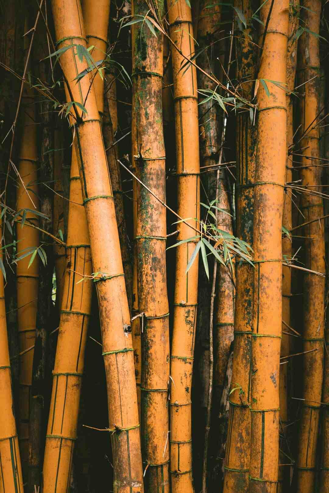 Comment arracher et replanter des bambous ?
