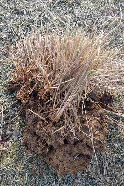 Comment poussent les mauvaises herbes ?