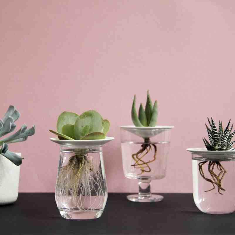 Comment prendre soin d'une plante succulente ?