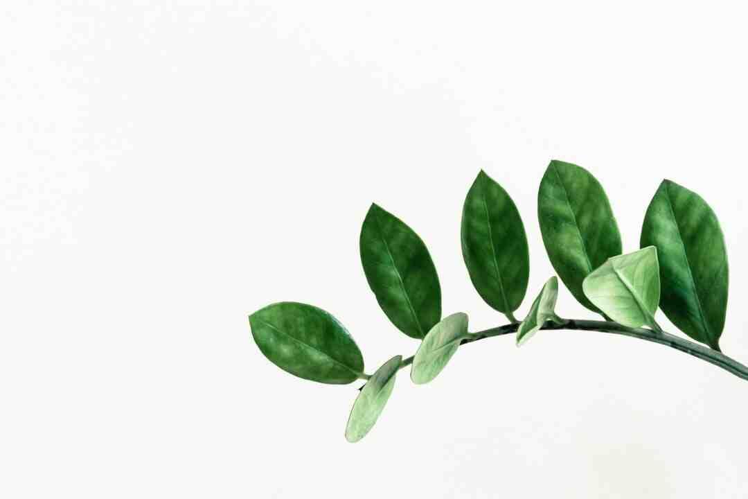 Comment récupérer une plante trop arrosée ?