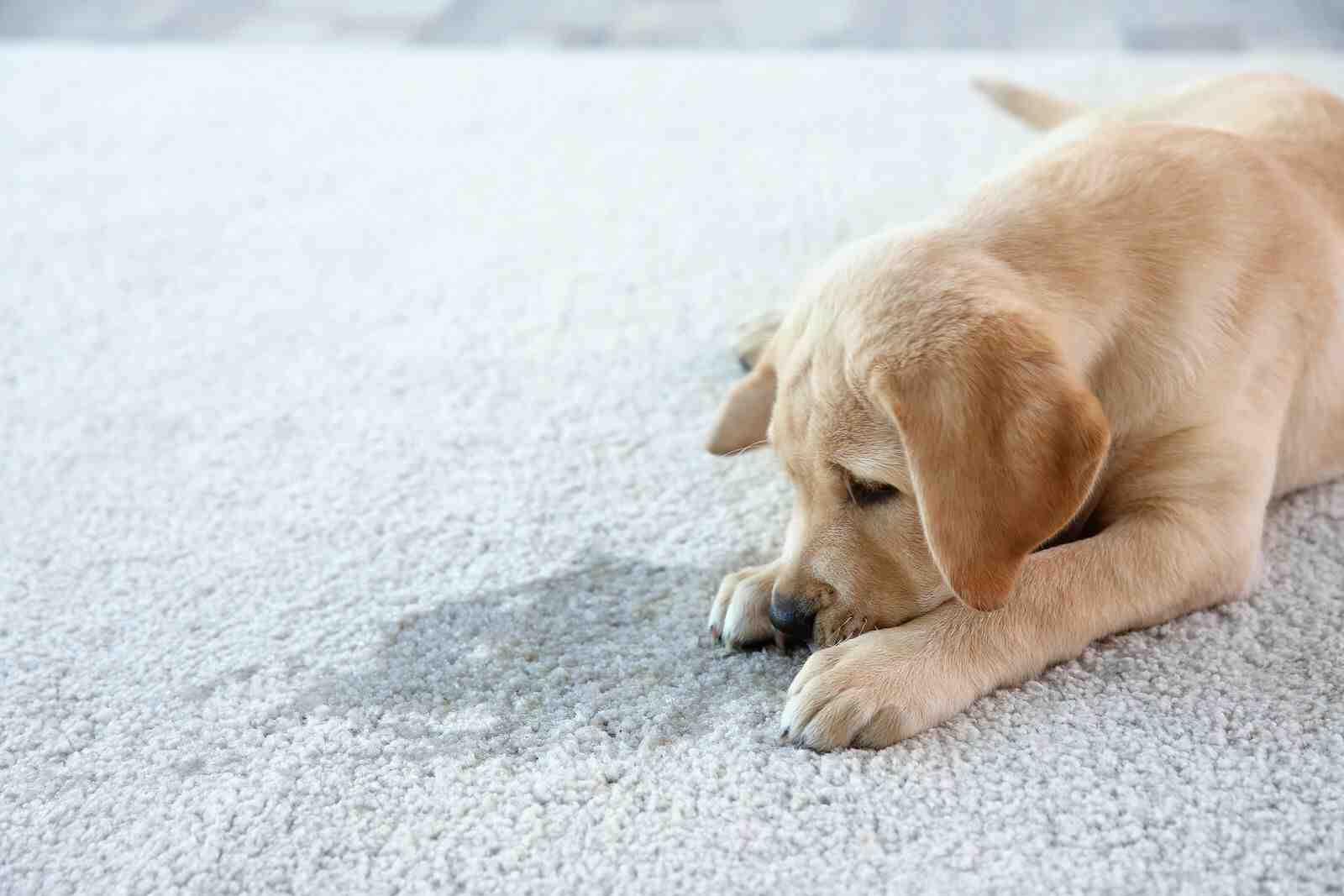 Comment sauver un tapis ?