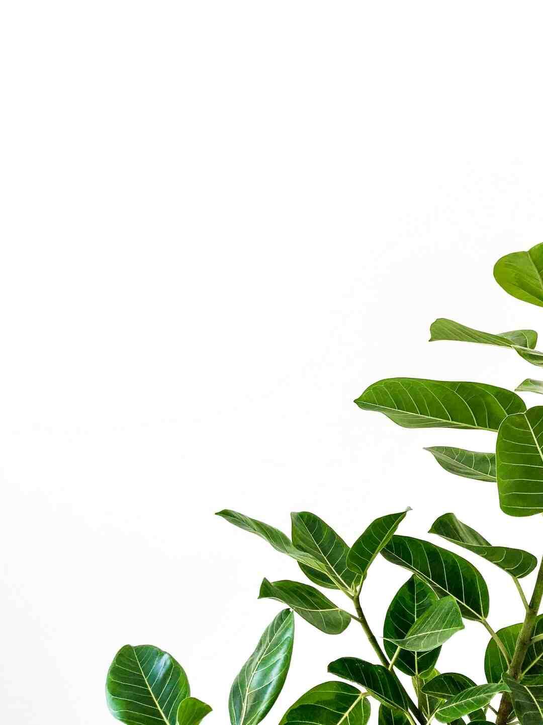 Pourquoi les feuilles de mes plantes sèches ?