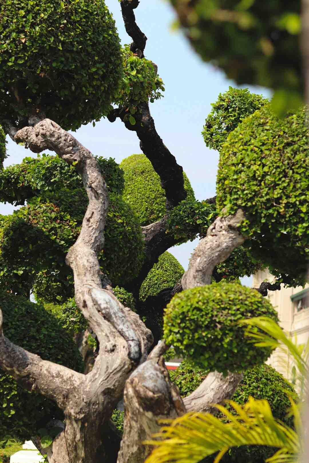 Quand et comment tailler un arbuste ?