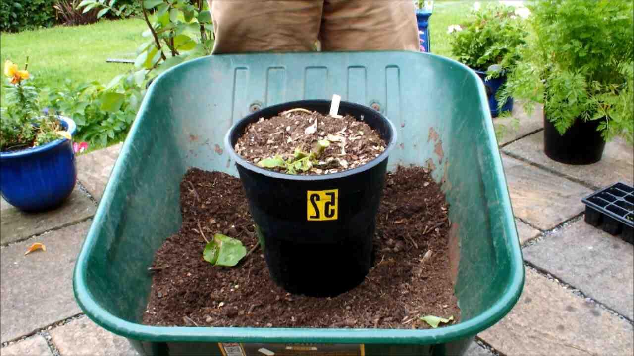 Comment augmenter le rendement de pomme de terre ?