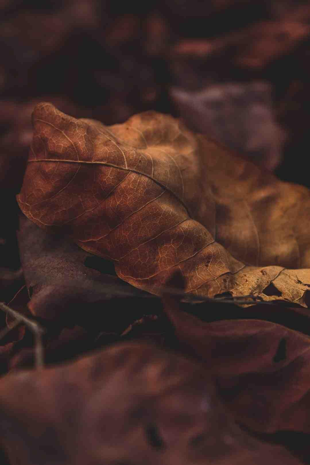 Comment couper les feuilles des plantes vertes ?
