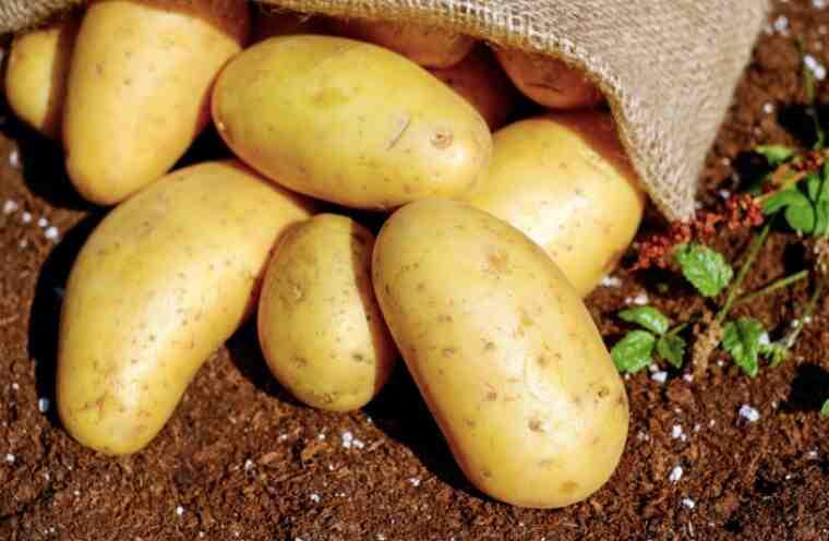 Comment entretenir des plants de pomme de terre ?