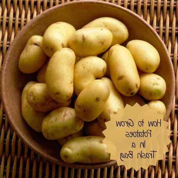 Comment entretenir des pomme de terre ?