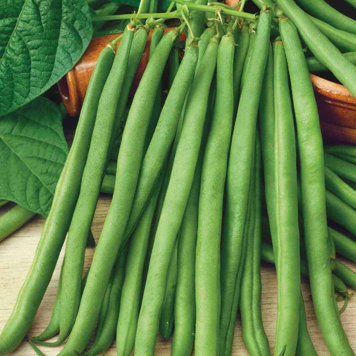 Comment faire germer des haricots rouges ?