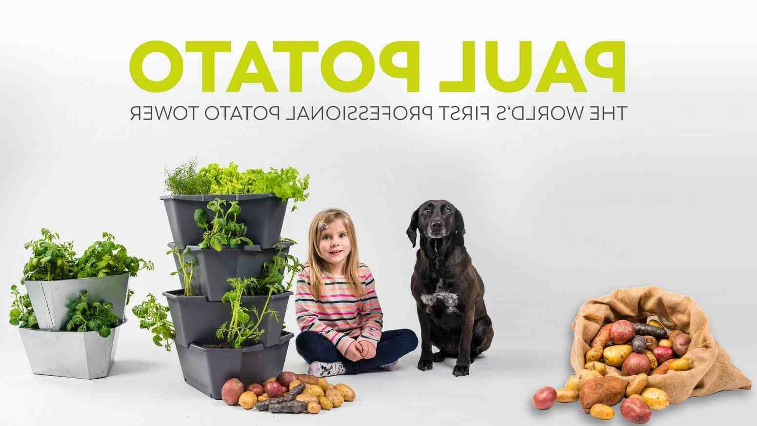 Comment faire pousser des pommes de terre dans un seau ?