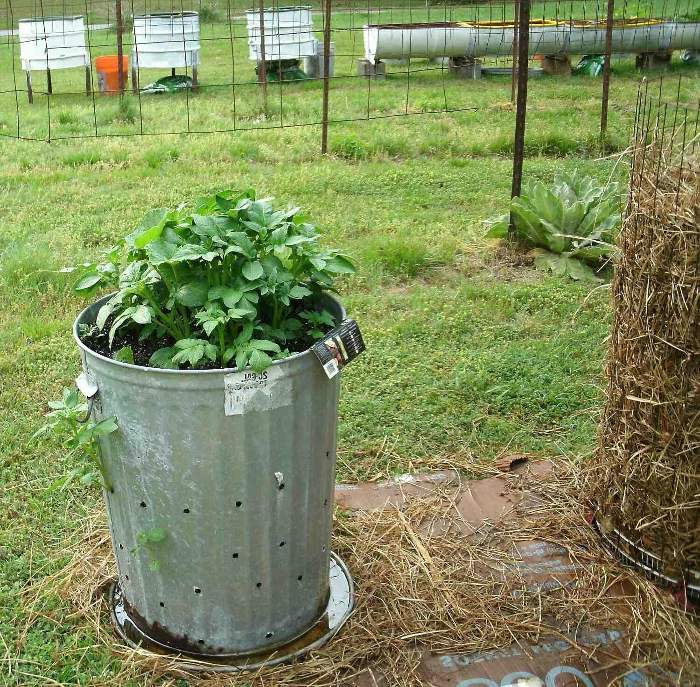 Comment faire pousser une pomme de terre dans l'eau ?