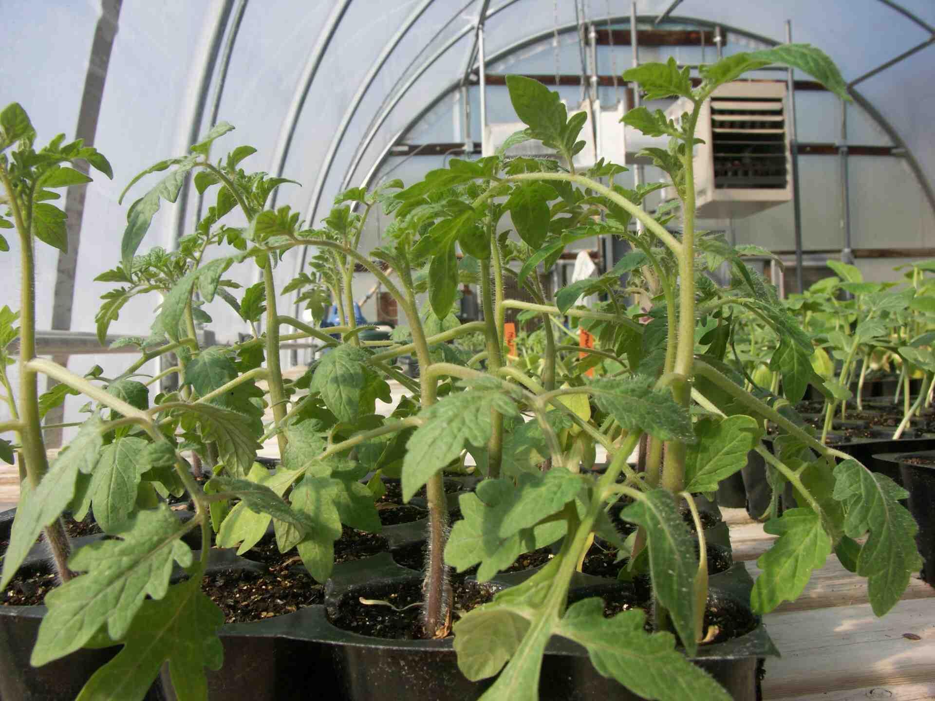 Où trouver du calcium pour les plantes ?