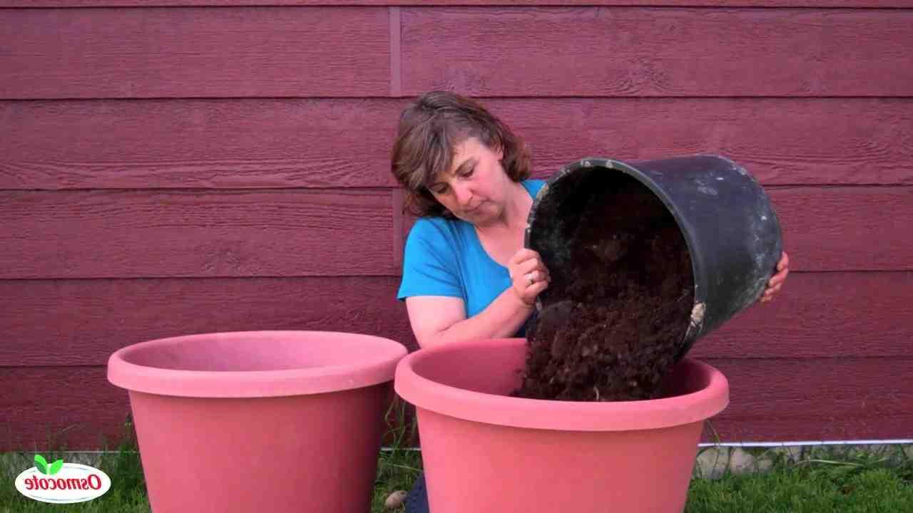 Quand planter Tour de pomme de terre ?
