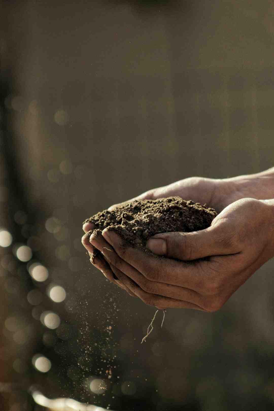 Quand planter les concombres en 2021 ?