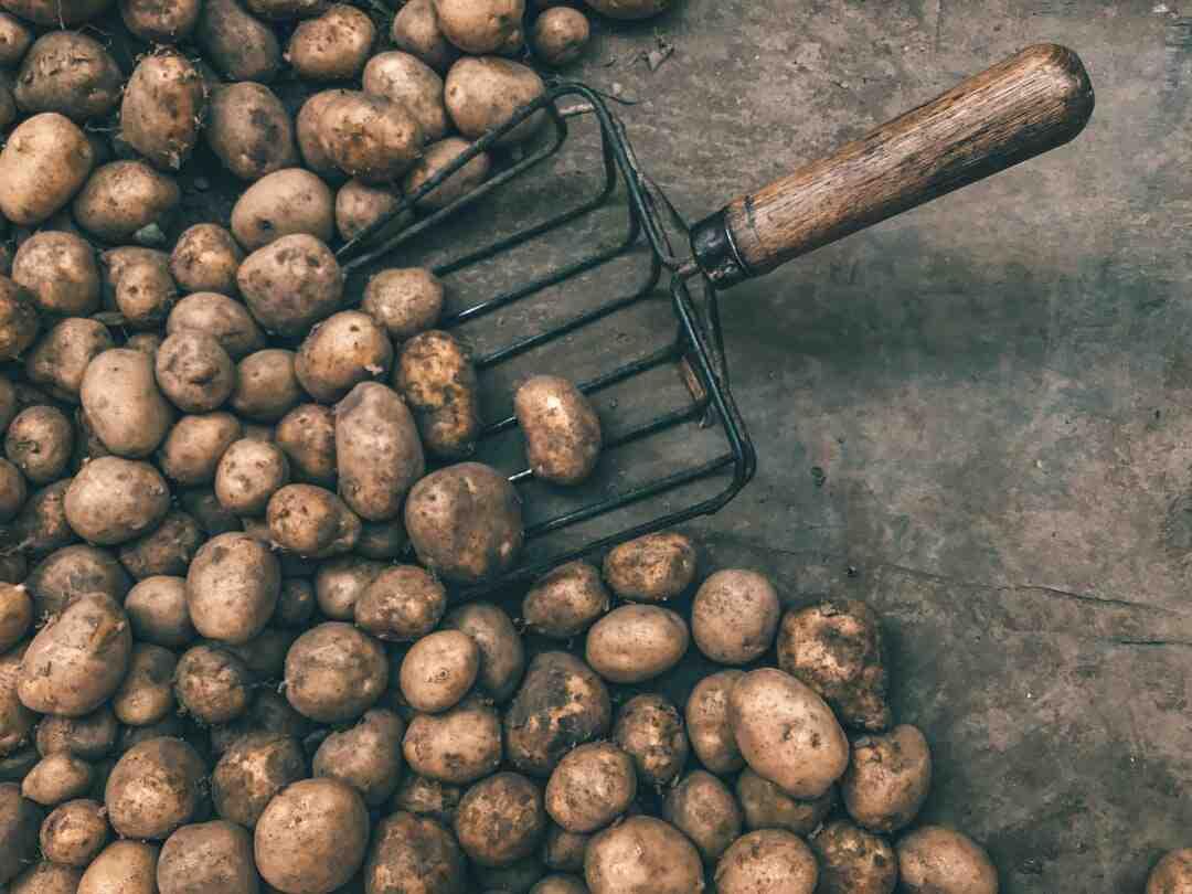 Quand planter les pommes de terre en 2020 ?
