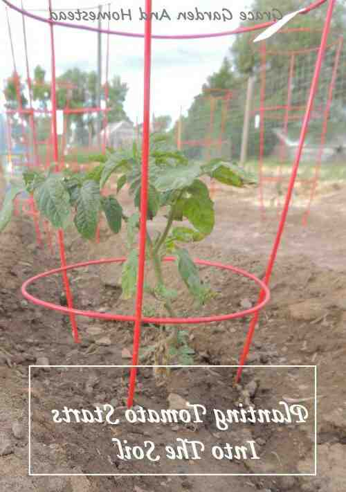Quand planter tomates pleine terre avec la lune ?