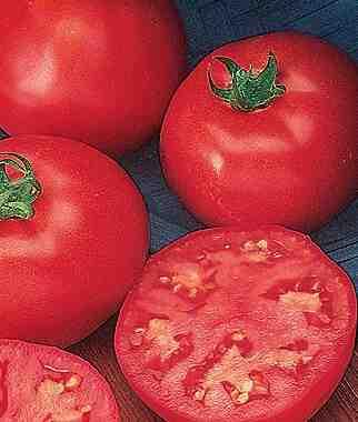 Quel distance entre les pieds de tomates ?