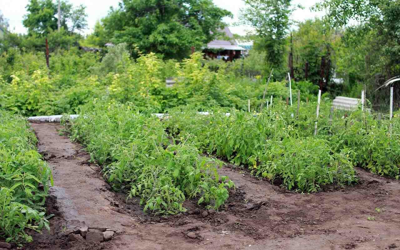 Quel légumes ne pas planter ensemble ?
