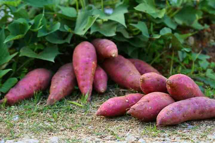 Quelle est la différence entre la patate douce orange et la patate douce blanche ?