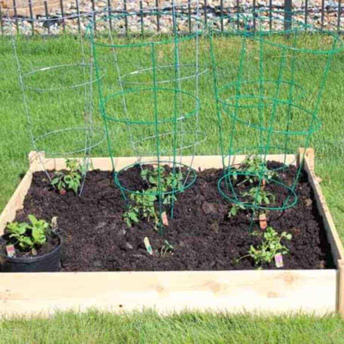 Quelle exposition pour des plants de tomates ?