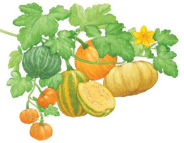 Quelle plante associer avec les poivrons ?
