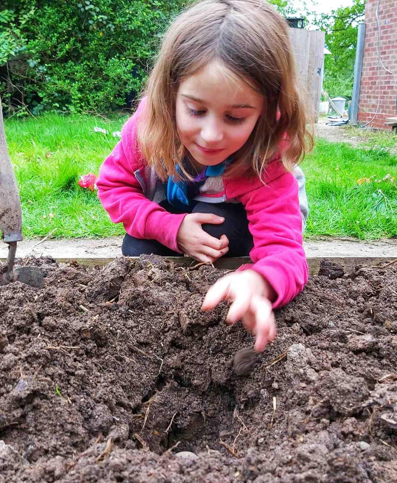 Quelle variété de pomme de terre planter ?