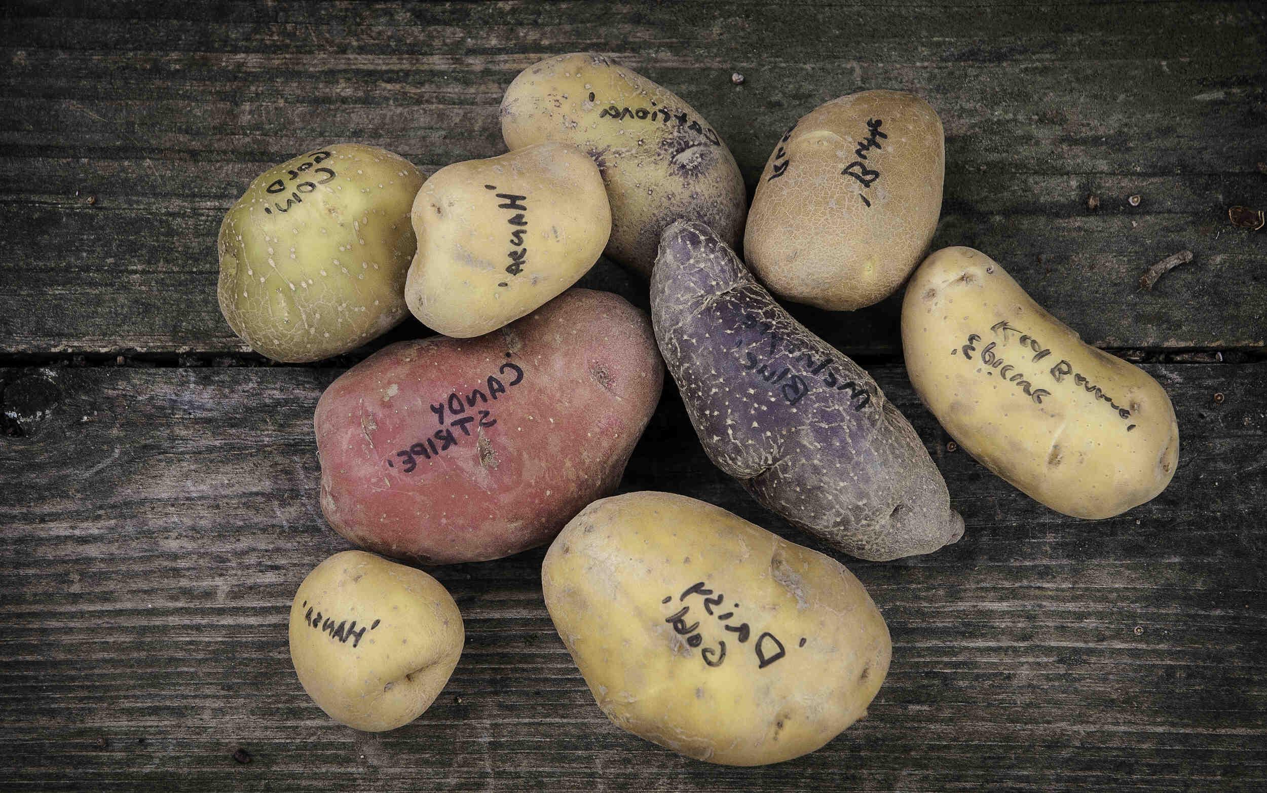Quelle variété de pomme de terre pour un gratin dauphinois ?